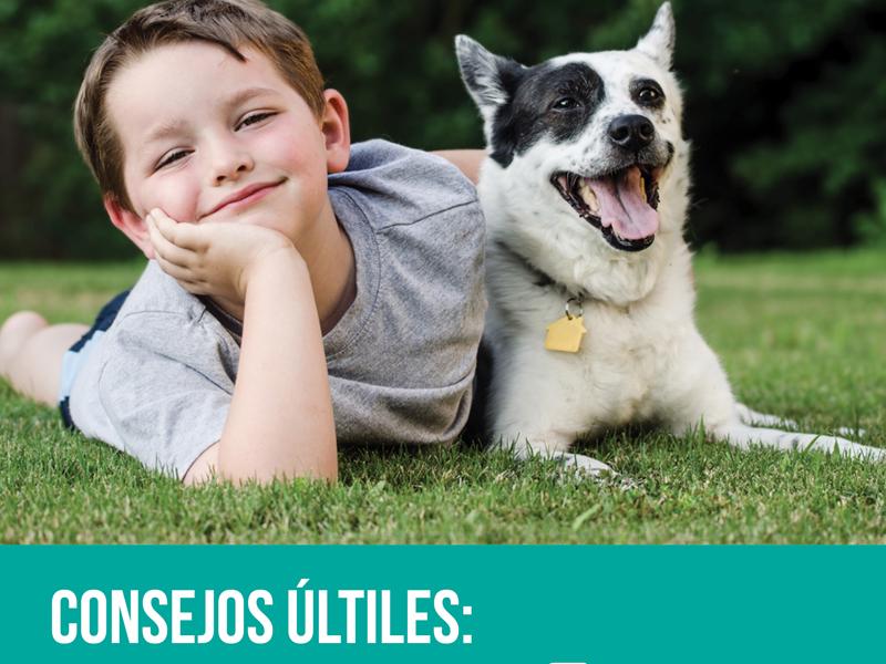 Campaña Tenencia Responsable De Mascotas